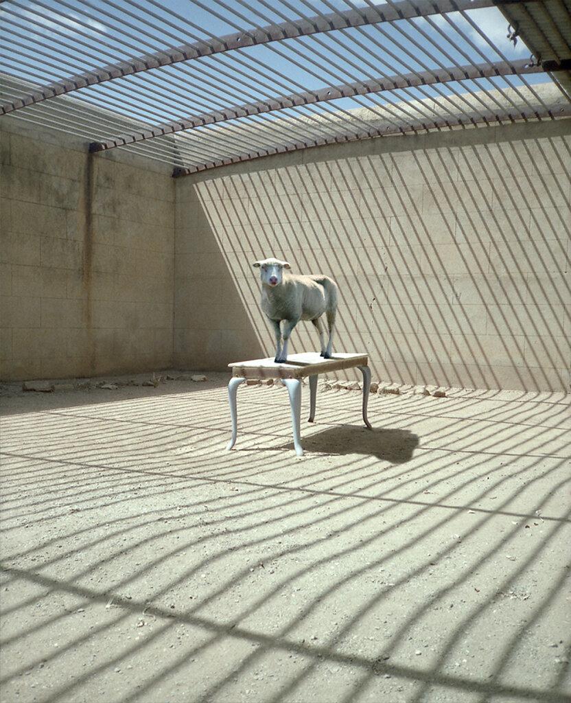 animals-landscapes-04.jpg