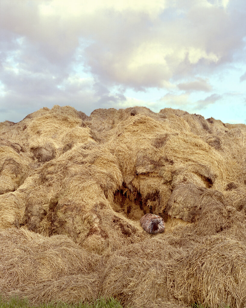 animals-landscapes-06.jpg